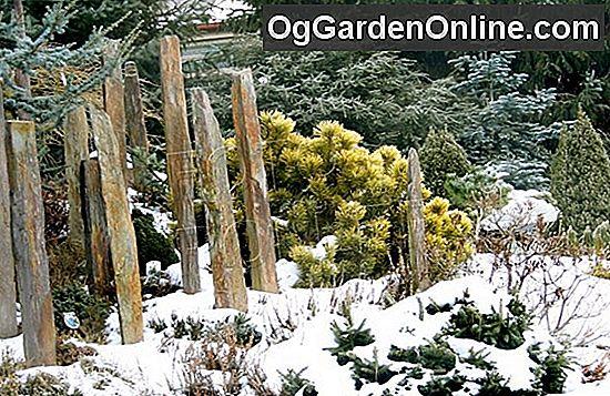 Zahrada V Zime Zahradnictvi Design Zahradni Dekorace 2019