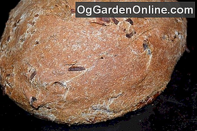 Backen Herb Brot: Rosmarin