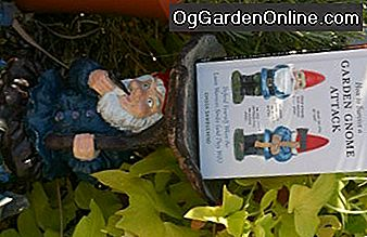 Spaß Feature: Daves Garden Book Review: review