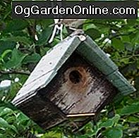 House Wrens, House Wren Häuser und Not-for-House-Wrens Häuser: house